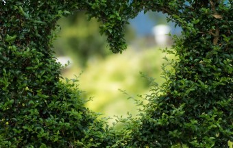 Green your Valentines